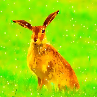Hare in Snow Christmas, Greeting Card Card
