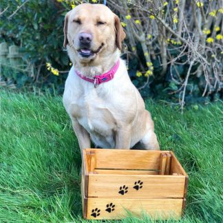 wooden dog toy crate