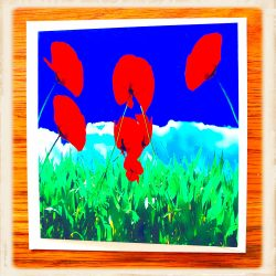 Red Poppies in Field Greeting Card