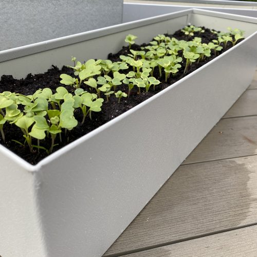 Grey Metal Planted Planter