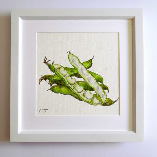 Broad bean fine art print
