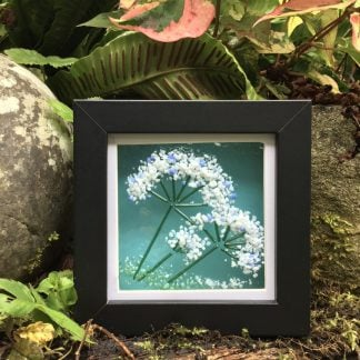 Sweet Cicely Fused Glass Box Frame