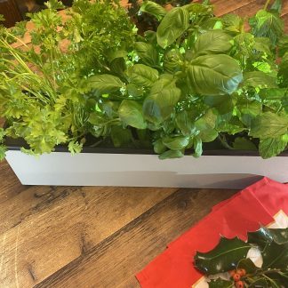 White Painted Herb Planter