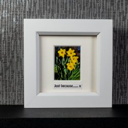 "Four yellow daffodils in a clump with optional messages including ""Just because…..x"" framed photo gift by Pictures2Mixtures"