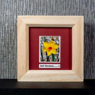 """Yellow daffodil with rich orange centre, framed photo gift with optional """"Just because"""" or """"Happy Mother's Day"""" message by Pictures2Mixtures"""